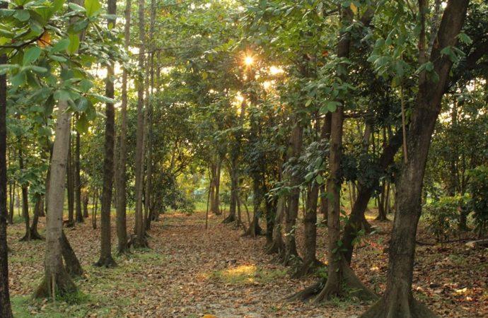 Toyota Indonesia Bangun Hutan Kota