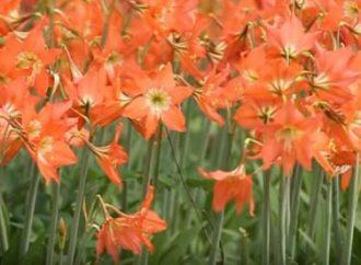 Wisata Kebun Bunga Diminati Wisatawan