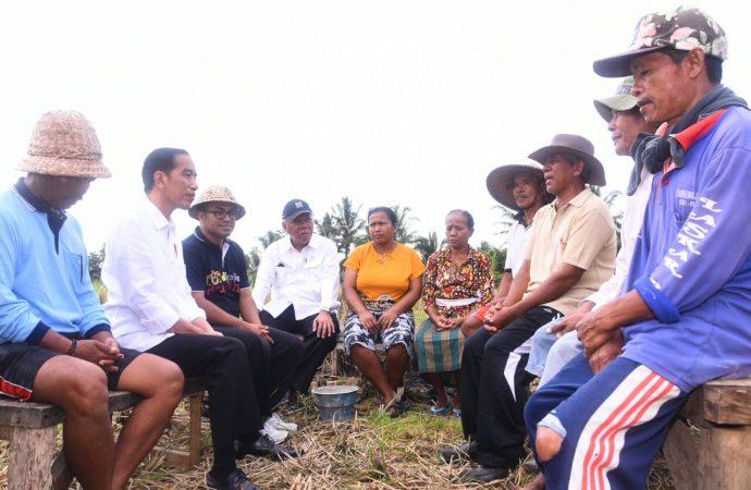 Di Balik Cerita Jokowi Susuri Pematang Sawah Temui Petani di Bali