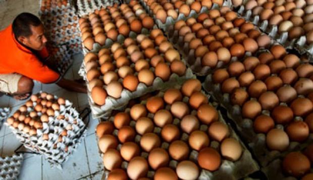 Stabilkan Harga Telur, Kementan Gelar OP