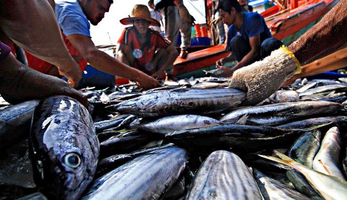 Pengamat Minta Pemerintah Bantu Persiapan Ekspor Perikanan