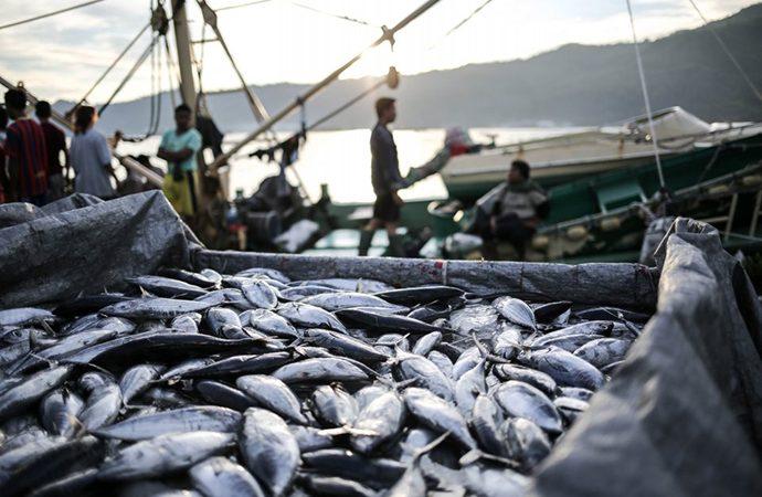 KKP Undang Nelayan Hingga Pebisnis Optimalkan Produksi Tuna