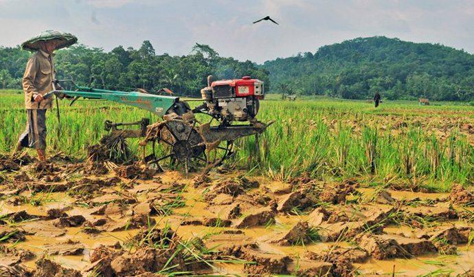 Kementan Harus Beri Insentif Ekonomi Lebih kepada Petani