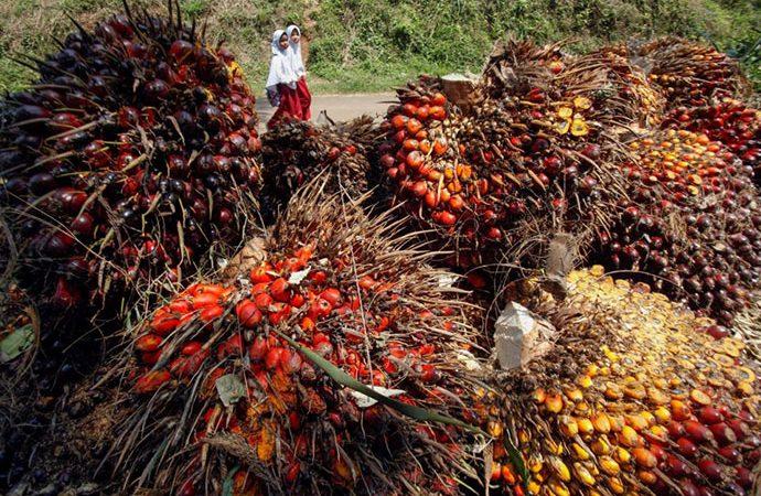 Gapki : Ekspor Minyak Sawit Periode Agustus Turun