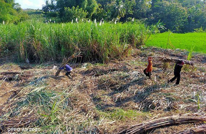 Pertamina Dukung Pembiayaan Untuk Tingkatkan Produktivitas Petani Tebu