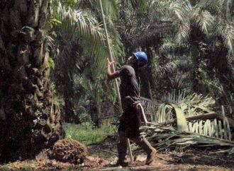 Produktifitas Petani Rendah, Koalisi Usulkan Moratorium Sawit Diperpanjang