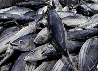 Punya Hasil Laut Melimpah, Apa yang Didapat Maluku Tak Sebanding